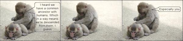 The monkeys do the evolution