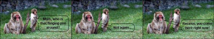 The monkeys do the bloggers
