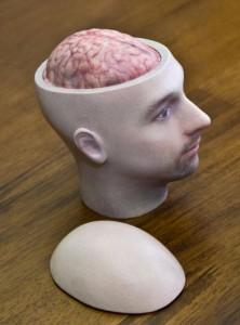 Braincase